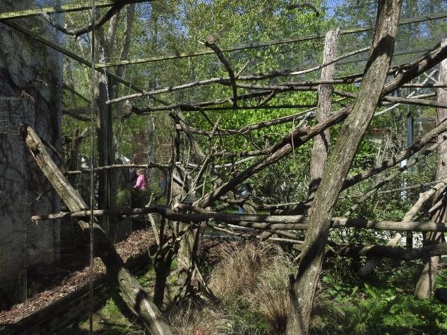 Leszoosdanslemonde afficher le sujet zoo de beauval for Zoo exterieur
