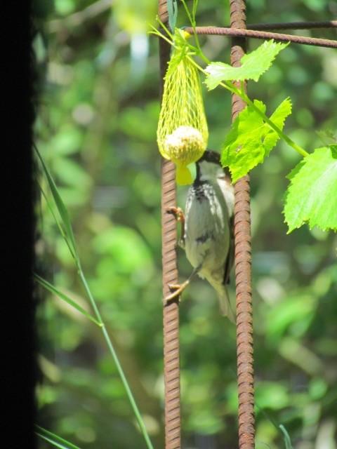 les oiseaux et petites bêtes au cours de nos balades - Page 31 01g43a