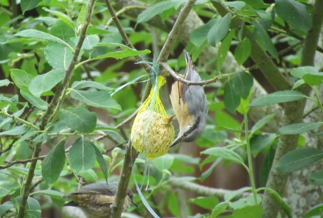 les oiseaux et petites bêtes au cours de nos balades - Page 31 01h62c