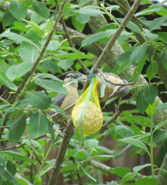 les oiseaux et petites bêtes au cours de nos balades - Page 31 01y0ns