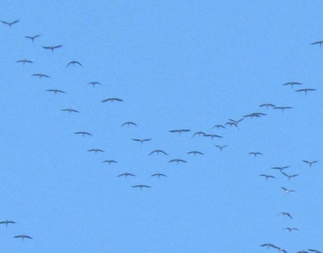 les oiseaux et petites bêtes au cours de nos balades - Page 18 17gqnd