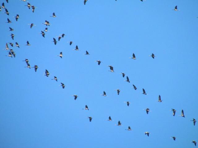 les oiseaux et petites bêtes au cours de nos balades - Page 18 20htbr