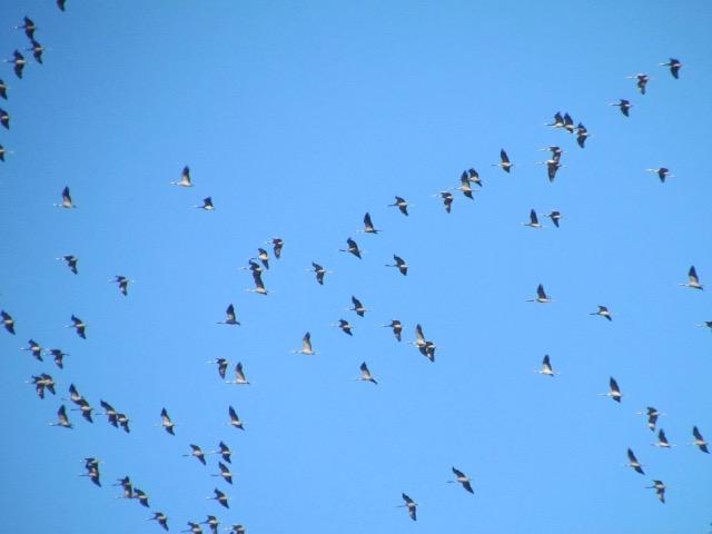 les oiseaux et petites bêtes au cours de nos balades - Page 18 20yfwf